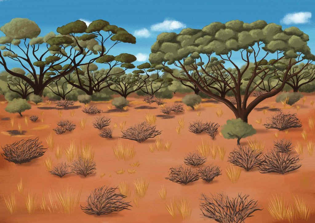 Australian Scrub - scrubland Illustration - ANiMOZ BiOME Art