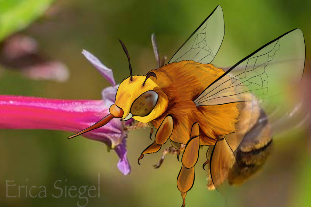 BOMBi - Teddy Bear Bee - ANiMOZ - Fight for Survival - Australian bees - pollinator - save the bees
