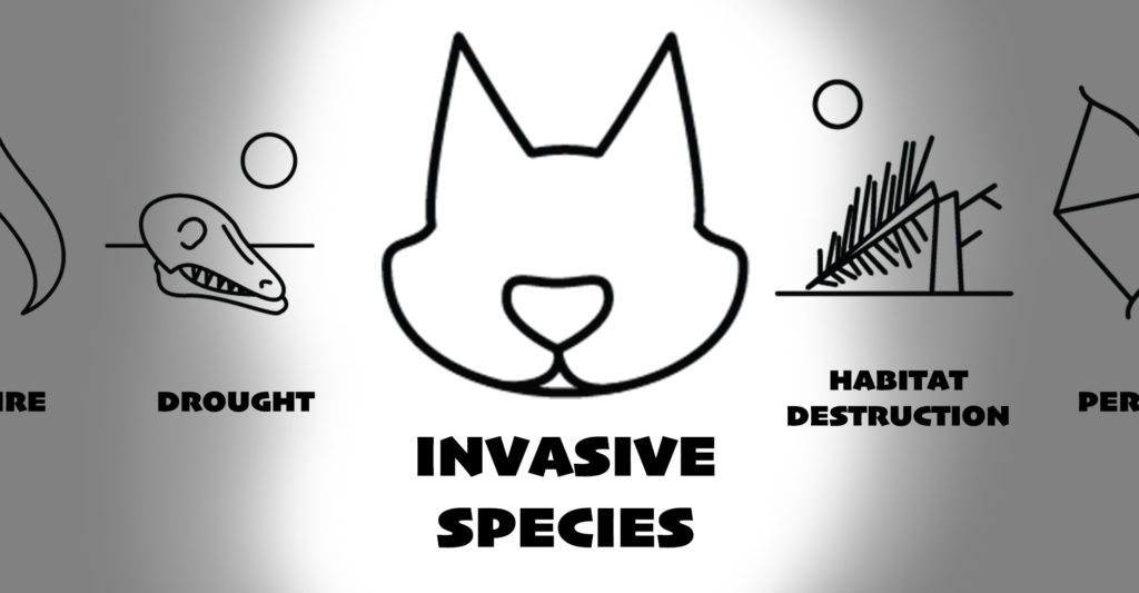 Invasive Species - Feral Predator - ANiMOZ - Endangerment - Fight for Survival - AWC