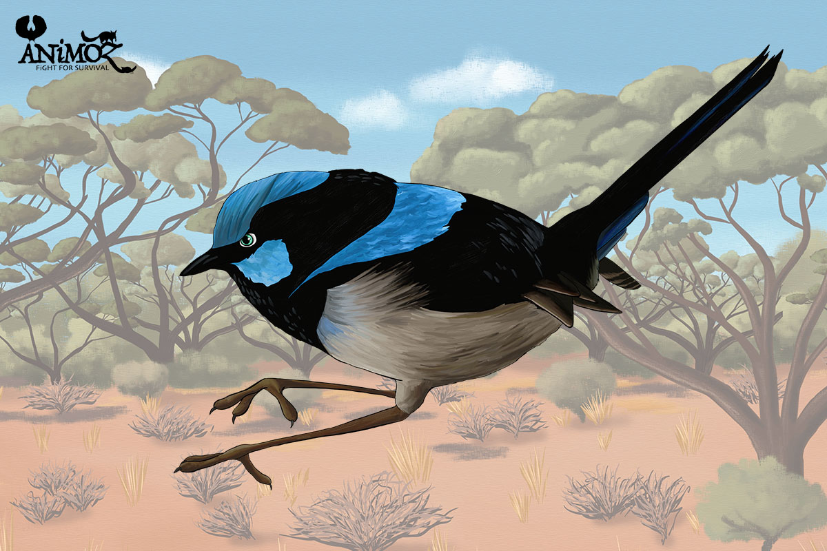 YAN - Superb fairywren - ANiMOZ - Fight for Survival - The game changing conservation - Collectible Card Game