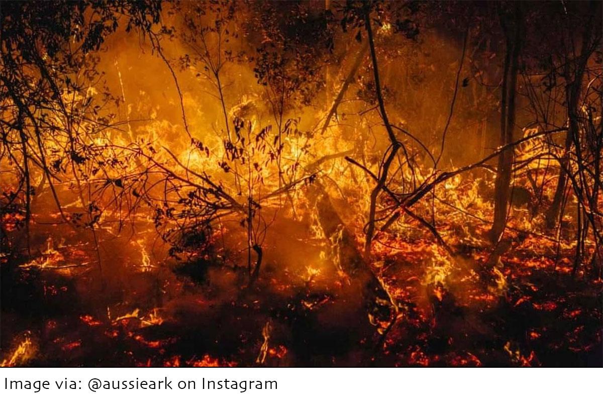 Australian bushfires - Image by Aussie Ark - ANiMOZ - Fight for Survival