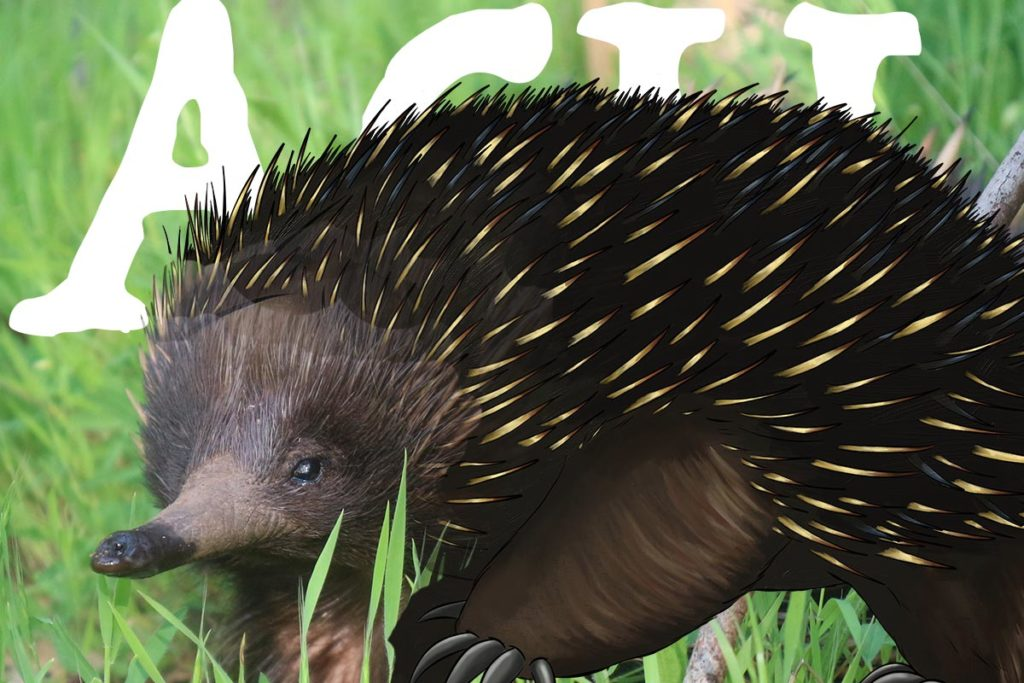Know your ANiMOZ species - ACU - Echidna - Collectible Card Game - Australian Animals