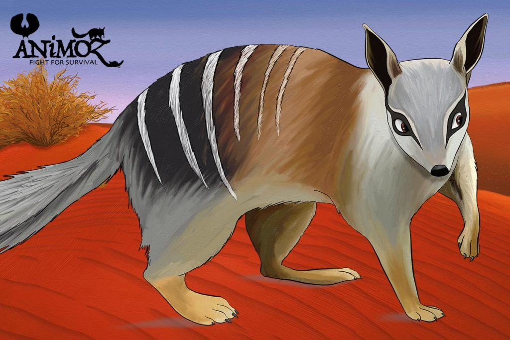 SCiATU - Numbat reintroduction central Australia - Australian Wildlife Conservancy - ANiMOZ - Fight for Survival