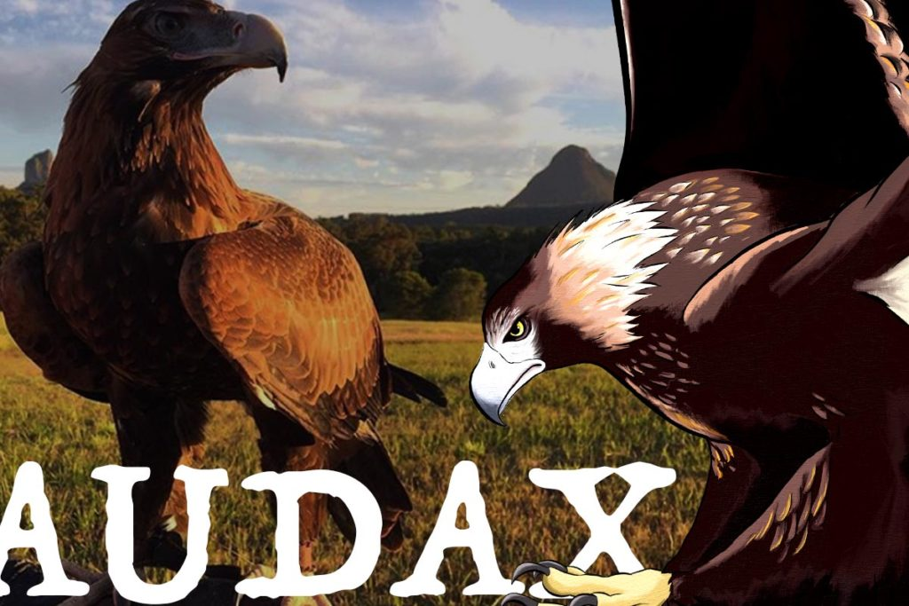 AUDAX - Know Your Species - ANiMOZ - Wedge-tailed Eagle - Australian Eagle