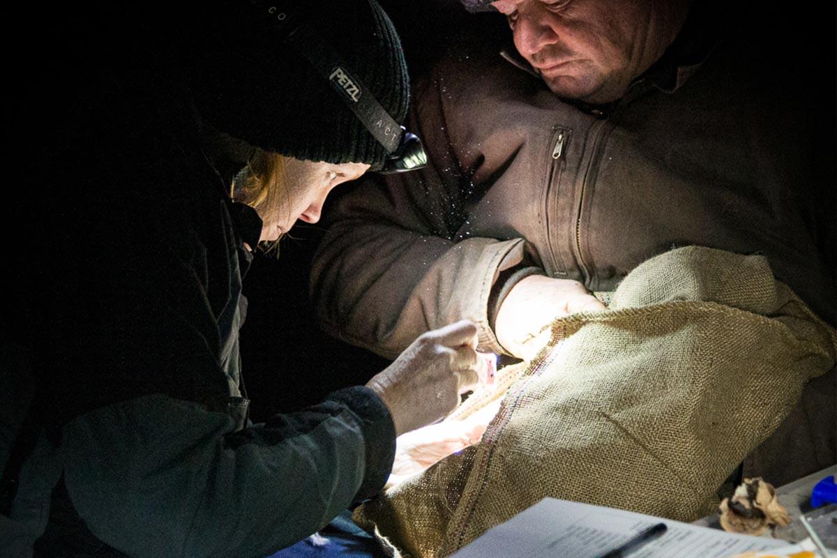 From the Field - ANiMOZ - Fight for Survival - Cassandra Arkinstall - University of Queensland - LAGOTi - Bilby Researcher Interview - Australian animal conservation - 3