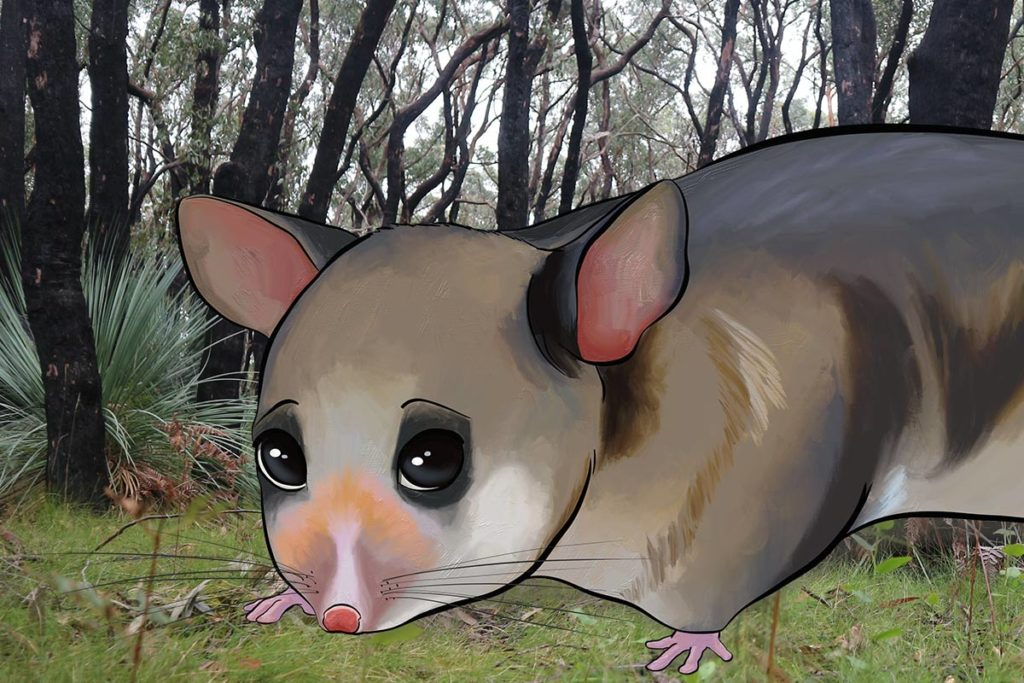 PARVU overcomes fires - ANiMOZ - Fight for Survival - Video of mountain pygmy possum conservation australia