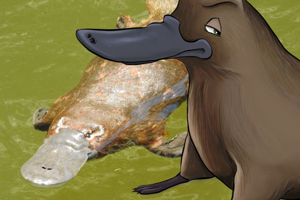 ANiMOZ, ANATi, Platypus, From the field, Ranger, Scientist, Ecology, Card Game, Conservation, Australian animals, Monotreme