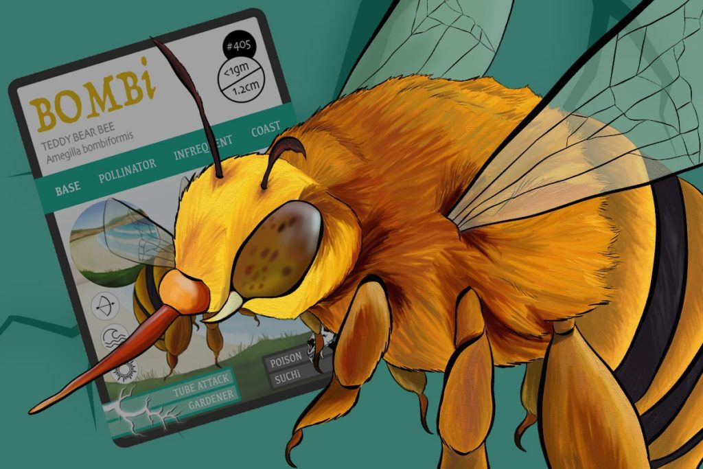 BOMBi - Teddy bear bee - Species report - Pollinator - Save the bees - ANiMOZ - trading card game - Australian wildlife - species report