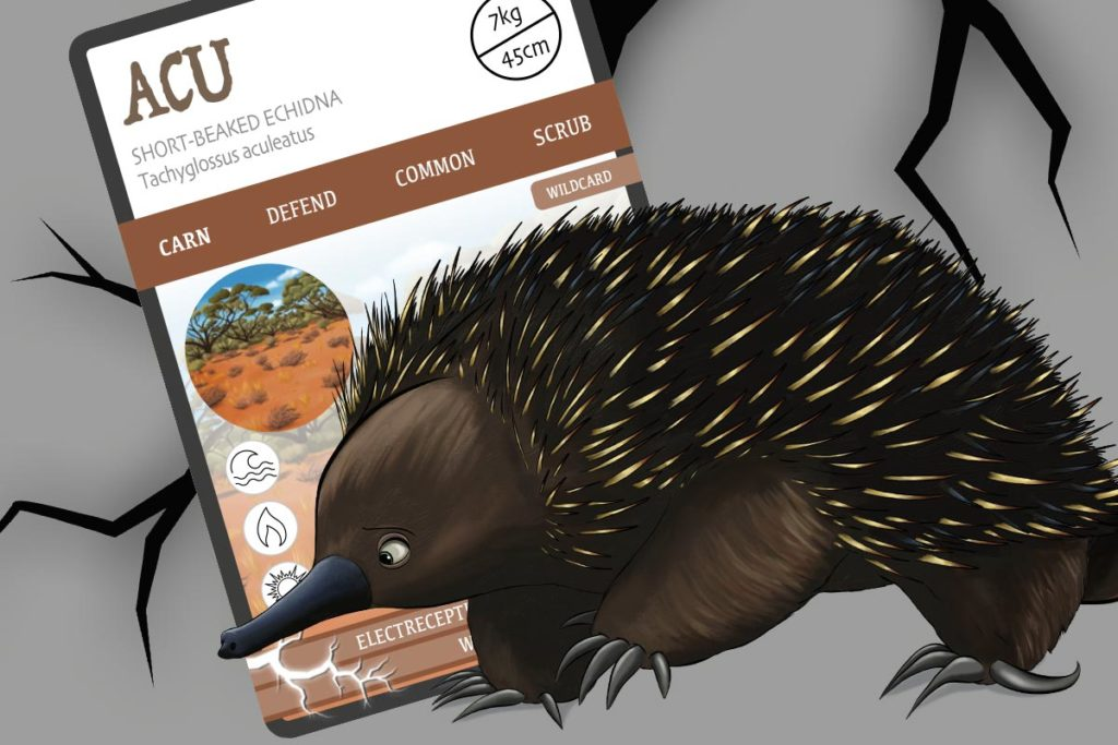 Short-beaked echidna - ACU - ANiMOZ - trading card game - Australian wildlife - species report