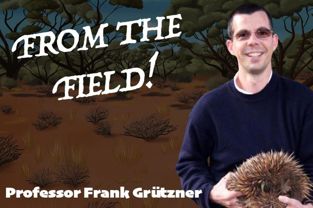 From the field - ACU - Frank Grutzner - Echidna CSI - ANiMOZ - Fight for Survival