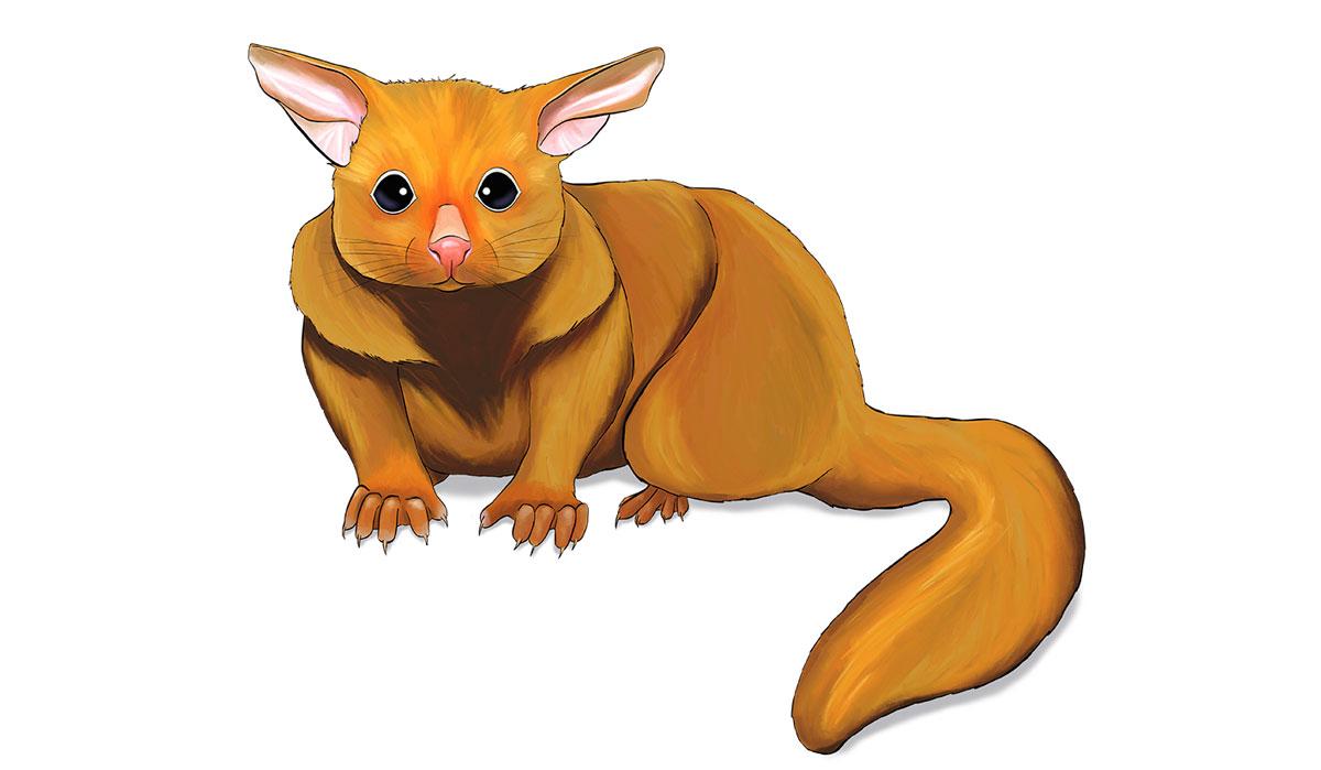 FULi - ANiMOZ - Card game - Australian animals - Wildlife education - Golden brushtail possum